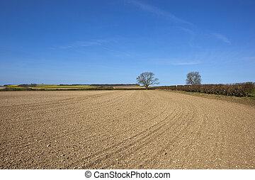 chalky, campo, cultivado