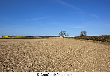 a newly cultivated field with chalky soil beside a hawthorn hedgerow in amongst rolling hills of canola and wheat in the yorkshire wolds england under a blue sky
