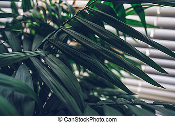 Chamaedoreas leaves with jalousie on background
