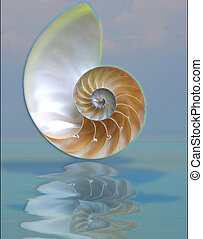 chamber reflection - chamber nautilus shell reflected in the...