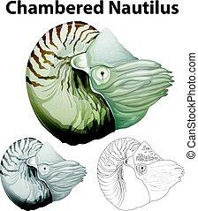 chambered, doodle, nautilus, personagem