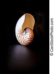 chambered, seashell, pompilius nautile