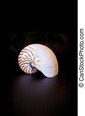 chambré, concha marina, pompilius nautilo