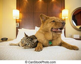 chambre à coucher, hôtel, chien, ensemble, chat