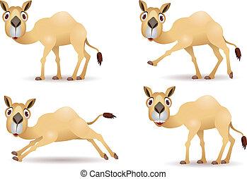 chameau, dessin animé, collection