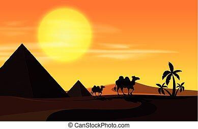 chameaux, coucher soleil, scène, désert