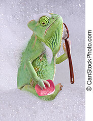 Chameleon bath time - A veiled chameleon is taking a bath.