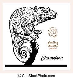 Chameleon black sign isolated on white background. Vector illustration