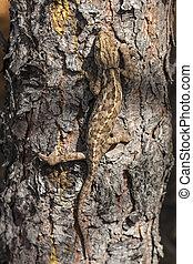 chameleon climbing vertically through the bark of a pine