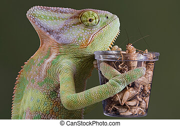 Chameleon cricket lunch