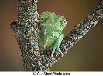 Chameleon Frog