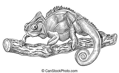 chameleon lizard sitting on tree