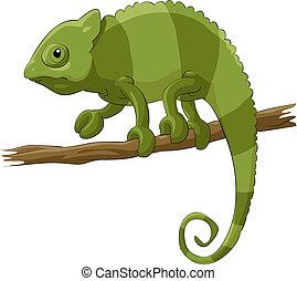 Chameleon on a white background, vector illustration