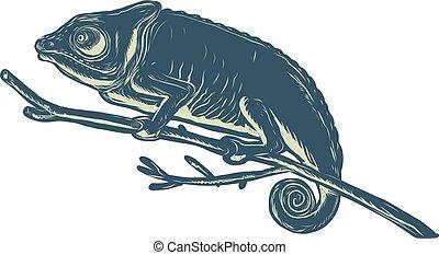 chameleon-on-branch-scratchboard
