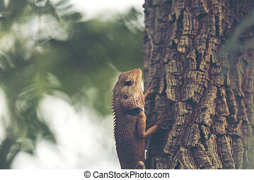 chameleon on the tree, vintage filter image