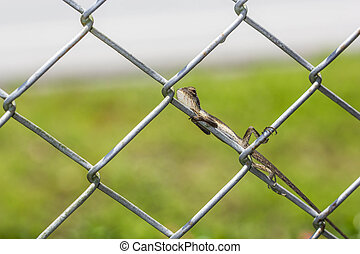 Leaves on the wire fence . stock photo - Search Pictures and Photo ...