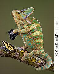 Chameleon photographer