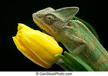 Chameleon - Beautiful big chameleon sitting on a flower