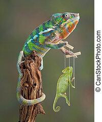 Chameleon Puppetmaster