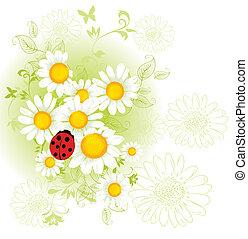 chamomil, kwiatowy, tło