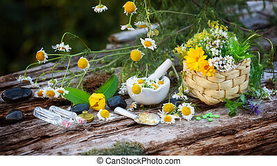 chamomile, 藥品, 植物, homeopathy