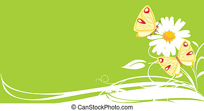 Chamomile and butterflies. Banner