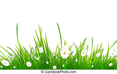 chamomile and grass on a white background