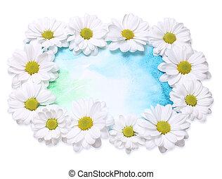 chamomile background