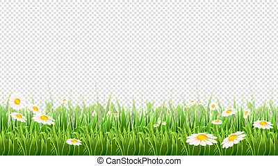 Chamomile field. Green grass, flowers and herbs border. Natural park or meadow isolated on transparent background. Blossom lawn vector banner