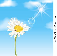 Chamomile flower and blue sky with clouds - Illustration ...