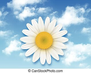 Chamomile flower and blue sky
