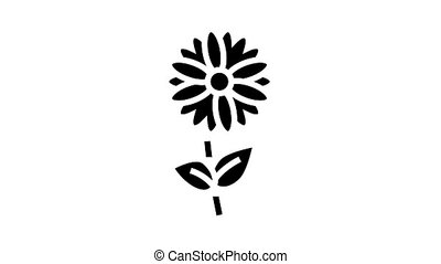 chamomile flower aromatherapy animated glyph icon. chamomile flower aromatherapy sign. isolated on white background