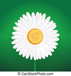 Chamomile flower, camomile, daisy wheel, daisy chain, chamomel