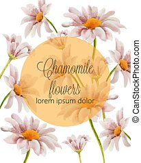 Chamomile flowers card with place for text in a golden ...