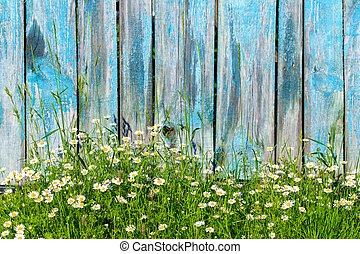 Chamomile flowers on a background of wooden fence