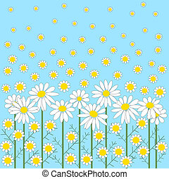 Chamomile flowers on a blue background