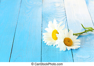Chamomile flowers on a blue wooden background