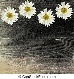Chamomile flowers on dark wooden background.