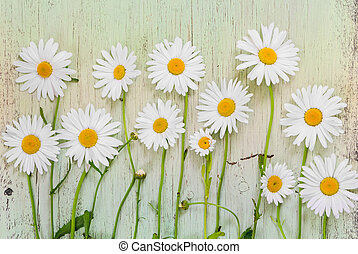 Chamomile flowers on light wooden rustic background.