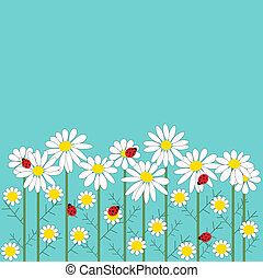 Chamomile flowers with a ladybirds on  blue backgroun