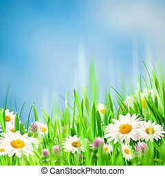 Chamomile harmony. Abstract natural backgrounds for your design