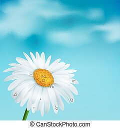Chamomile on a blue sky background