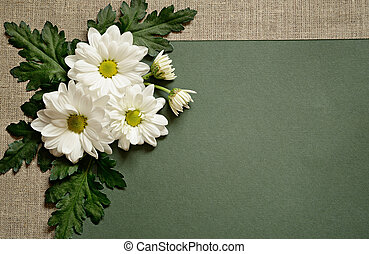 Chamomile on green paper background