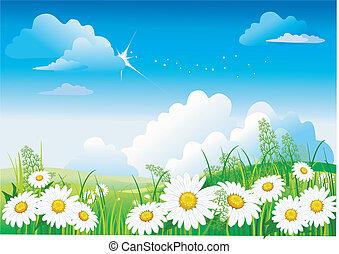 chamomile, op, blauwe hemel