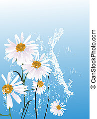 chamomile - vector illustration of a beautiful floral ...