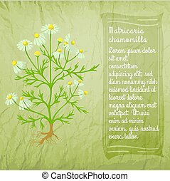 chamomile, wild, struik, spandoek, ouderwetse