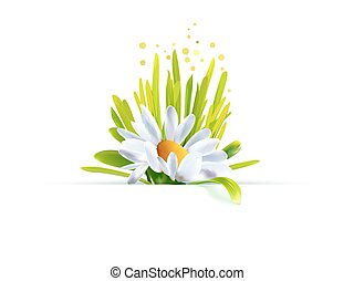 Chamomile with grass decor - Summer time design. Spring ...