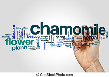 Chamomile word cloud concept on grey background