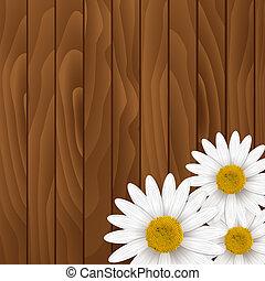 chamomiles, achtergrond