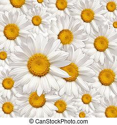 chamomiles background